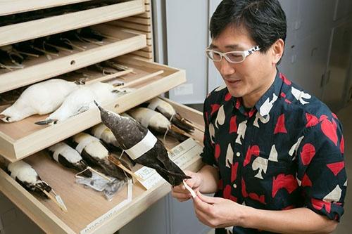 手にしているのは、川上さんらが2018年1月に発表した論文で小笠原の固有種であることを証明した小型のミズナギドリ(Puffinus bannermani)。それまでは別の鳥の亜種とされていたこともあり、正式な和名はまだ決まっていない。