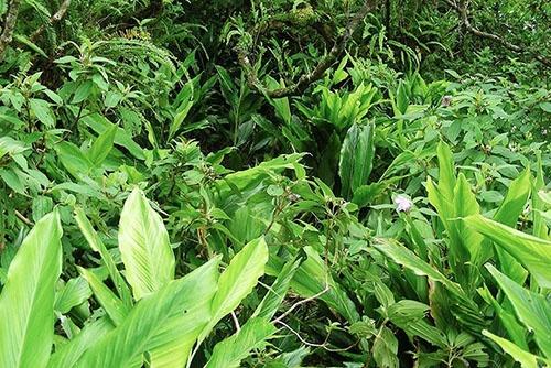 ミズナギドリがいなくなった北硫黄島の森。(写真提供:川上和人)