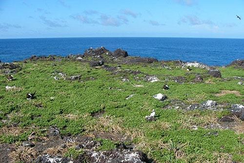 2004年の西之島。(写真提供:川上和人)
