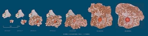 """2013年12月から2014年12月にかけての西之島の変化。(出典:<a href=""""http://www.gsi.go.jp/gyoumu/gyoumu41000.html"""" target=""""_blank"""">国土地理院ウェブサイト</a>、協力:<a href=""""http://www.gsi.go.jp/gyoumu/gyoumu41000.html"""" target=""""_blank"""">アジア航測千葉達朗氏</a>)"""