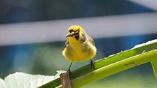 博学多才な鳥類学者は、どのように誕生したのか