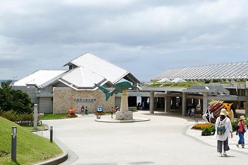 研究所に隣接する沖縄美ら海水族館。出迎えてくれるモニュメントはジンベエザメだ。水族館の生きものたちは研究対象でもある。
