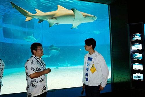 「サメ博士の部屋」の中にある「危険ザメの海」の前。うしろのサメはレモンザメ。オオメジロザメと同じメジロザメ科だ。