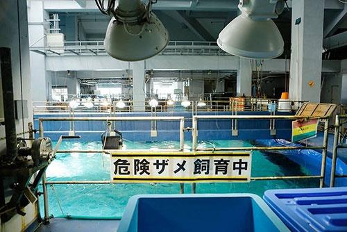 サメの繁殖を研究するには、生きた個体を飼育・繁殖する水族館は格好の施設。