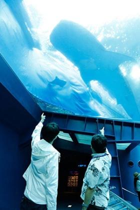 こちらは「黒潮の海」のアクアルーム。