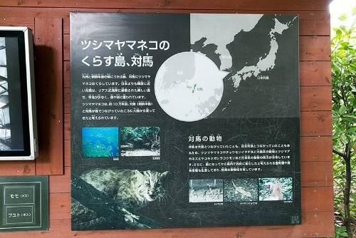 井の頭自然文化園の解説。対馬は九州と朝鮮半島の中ほどに位置している。