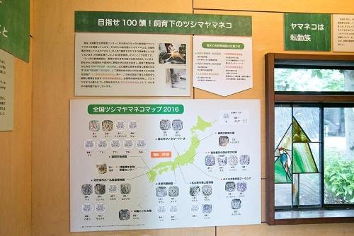 井の頭自然文化園「ヤマネコミニ特設展」の解説より。100頭の維持を目指し、ツシマヤマネコは全国9つの動物園で血統を管理しつつ飼育されている。
