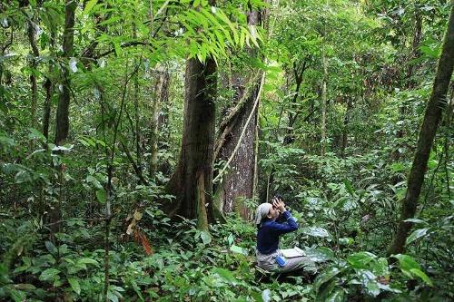 調査中の久世さん。オランウータンの調査では待つ時間がとても長い。(写真提供:川端裕人)