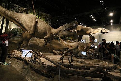 アルバートサウルスの群れ。(写真提供:川端裕人)