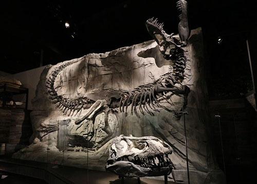「ブラックビューティ」。本物の頭骨は重すぎて壁の全身骨格と一緒に展示できず、床に置かれている。(写真提供:川端裕人)