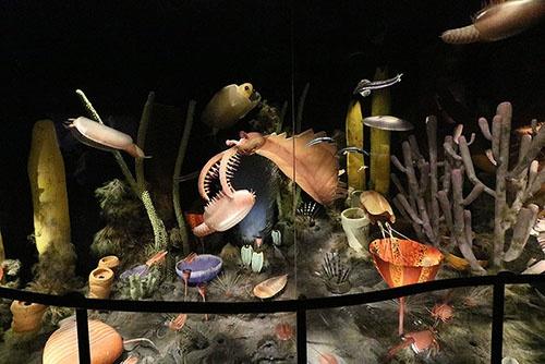 カンブリア紀のバージェス動物群の復元模型。(写真提供:川端裕人)