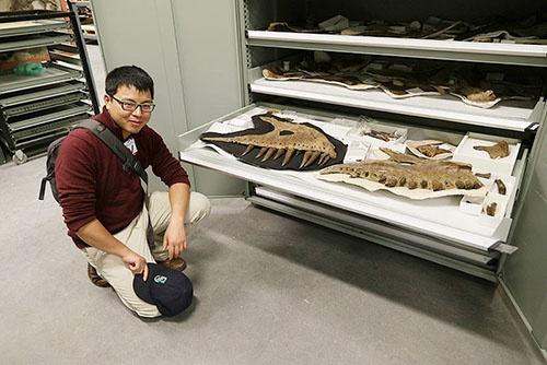 化石はロイヤル・ティレル古生物学博物館に保管されている。(写真提供:川端裕人)