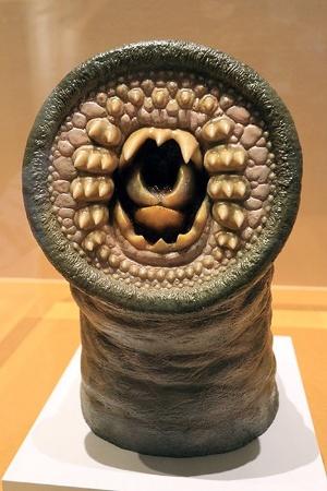 ヤツメウナギの口の模型。魚のような顎はない。(2016年科博特別展「海のハンター展」の展示より)(写真:ナショナル ジオグラフィック)