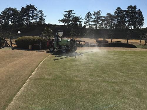 肥料をゴルフ場に散布している様子