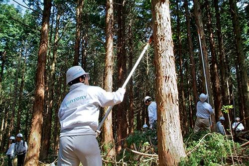 森林整備体験に汗を流すサントリーの社員たち