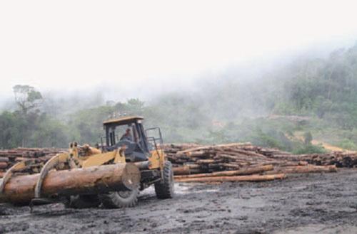 マレーシアのサラワク州では違法伐採がたびたび指摘されてきた。写真は違法伐採が指摘されてきた大手伐採会社のサラワク州にある林内貯木場<br />Global Witness