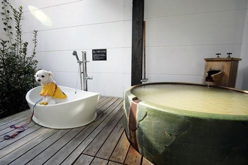 ツアーで用意した宿泊先の客室には、愛犬用の露天風呂まで用意されていた