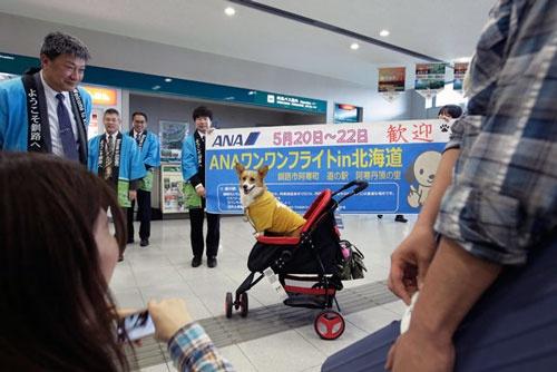 「ワンワンフライト in 北海道」で無事に釧路空港に到着し、記念撮影をするイヌ(写真:太田 潔、ほかも同じ)
