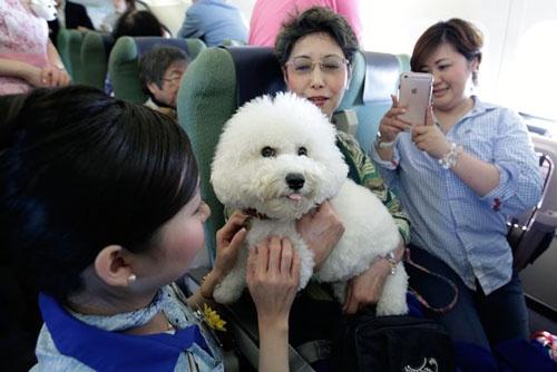 飼い主が愛犬を膝の上で抱いておくこともできる