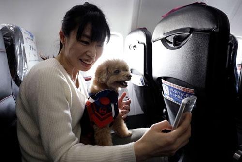 機内にはペット用のコスチュームも用意。ツルのマークが付いたJALの客室乗務員のような洋服を、愛犬に着せて、記念撮影することもできる