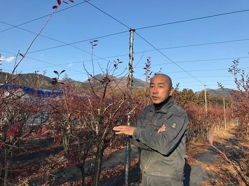 伊藤隆弘さんのブルーベリー畑(神奈川県秦野市)