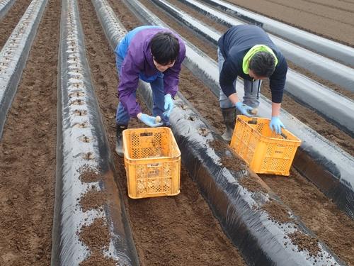 農場でストレス軽減を確かめるための実験(千葉県香取市)