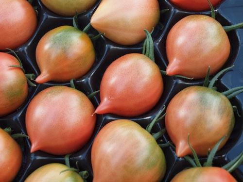 今井氏の技術でつくったトマト。先がとがり、切るとハート型になる(写真は今井氏提供)
