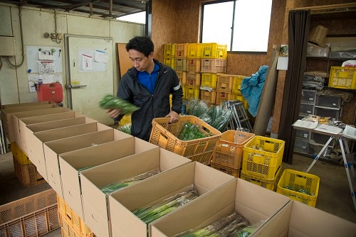 久松農園の出荷の様子(写真提供:久松農園)