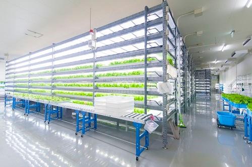 千葉県横芝光町にあるエージーピーの植物工場(写真提供:エージーピー)