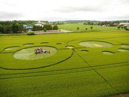 農場と消費者の距離を近づけるため、畑にミステリーサークルをつくった(北海道本別町、前田氏提供)