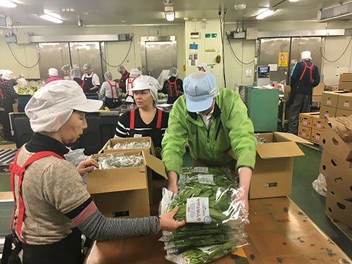 オリックスのホウレンソウを扱うファーマインドの物流センター(川崎市)