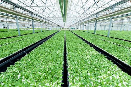 オリックスの葉物野菜の栽培施設(長野県富士見町)