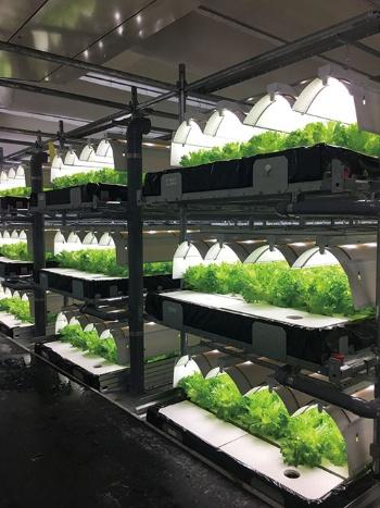 植物工場を複数建設する企業が登場した(秋田県大館市にあるバイテックの工場)