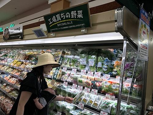 工場野菜のコーナーを設けたスーパーもある(柏市にあるマルエツ北柏店)