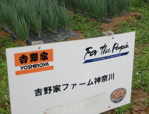 すでに生産をやめた吉野家ファーム神奈川の畑(横浜市)