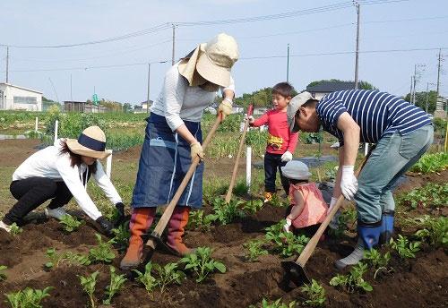 会員とスタッフが一緒に農作業する(マイファームの体験農園、横浜市神奈川区片倉)