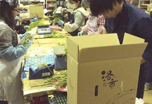 洛市の野菜の調整・出荷の様子(京都市)