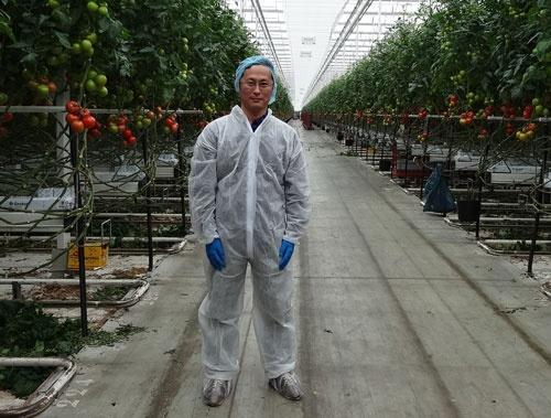 オランダの7.5ヘクタールの巨大トマト施設を視察する久枝和昇氏