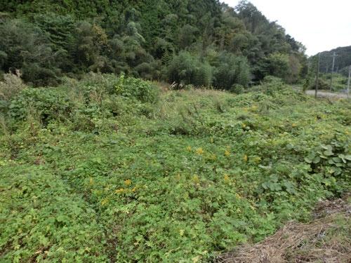 耕作放棄地。雑草が生い茂っている