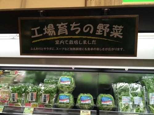 マルエツに登場した「工場育ちの野菜」コーナー(東京都調布市の国領店)