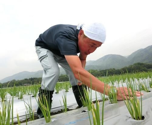 2年前は畑で農作業をしていた(京都府亀岡市)