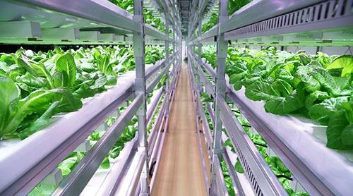 静岡県富士市にあるイノベタスの植物工場。ファームシップがサポートしている(写真提供:ファームシップ)