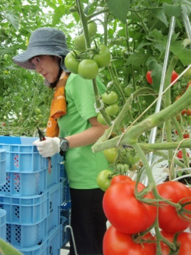 施設を使いこなし、利益を出すには一定の期間が必要(2011年7月、北海道千歳市)