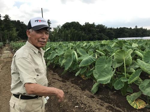吉沢さんが「技術の集大成だ」と話すサトイモ畑(埼玉県川越市)