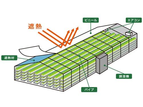 遮熱シートや調湿機を使う独自の植物工場の仕組み(西東京市の東大生態調和農学機構、画像提供:プランツラボラトリー)
