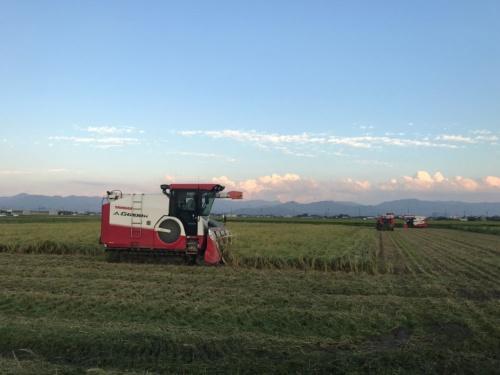 広大な農場をコンバインが走る(滋賀県彦根市)