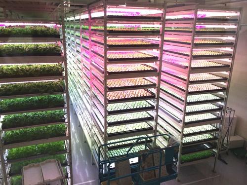 LEDの光が美しく照らすMIRAIの植物工場(千葉県柏市)