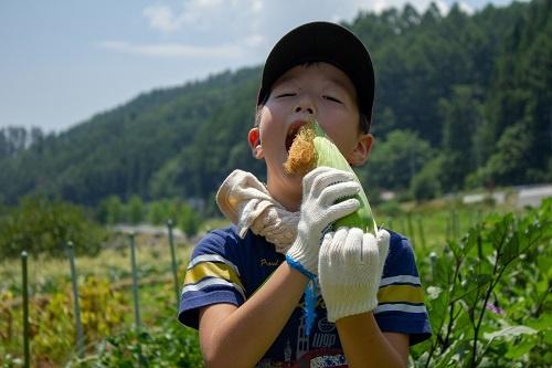 JTBの収穫イベント。畑で食べるトウモロコシのおいしさは格別(山梨県北杜市、写真提供:JTB)