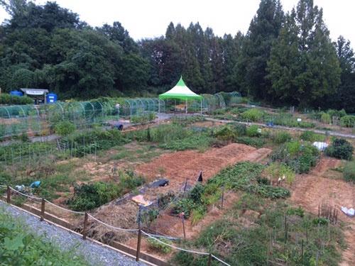 光州市の市民農園。日本のものとほとんど同じという(写真は小野氏提供)