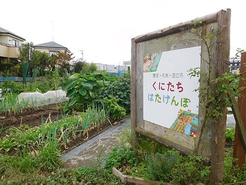 小野氏が運営するイベント農園「くにたち はたけんぼ」。都市農地は日本の価値だ(国立市)